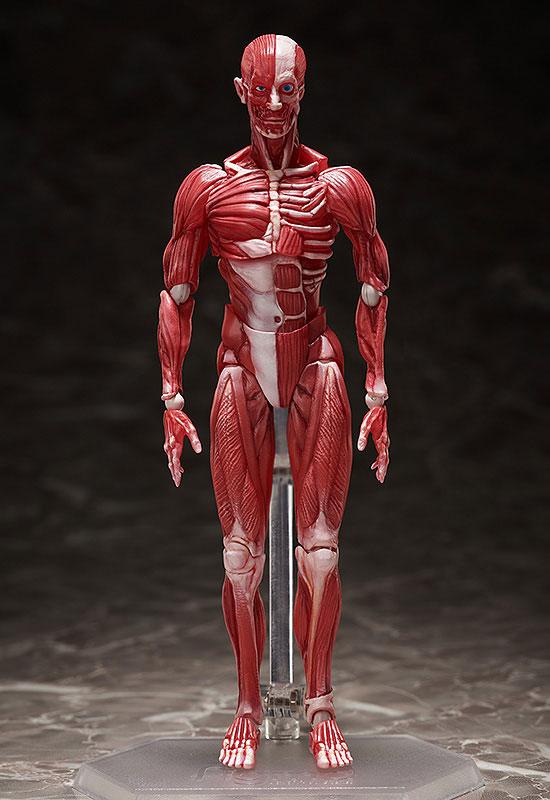 figma『人体模型』可動フィギュア-001