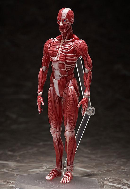 figma『人体模型』可動フィギュア-002