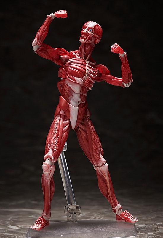 figma『人体模型』可動フィギュア-004