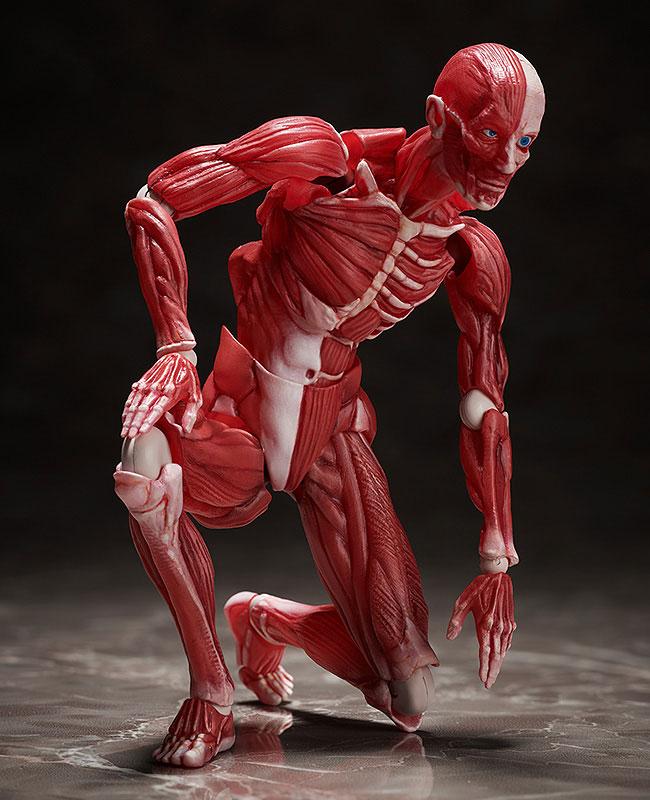 figma『人体模型』可動フィギュア-005