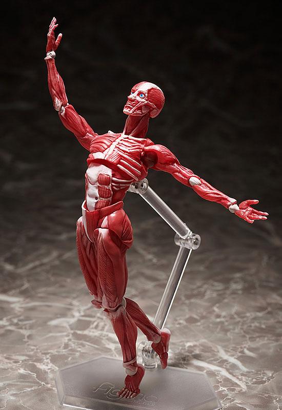 figma『人体模型』可動フィギュア-006