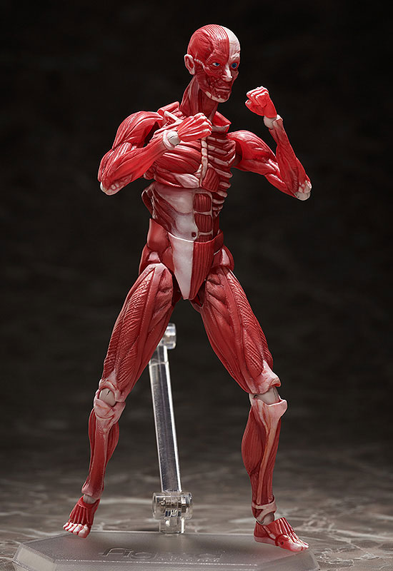 figma『人体模型』可動フィギュア-007