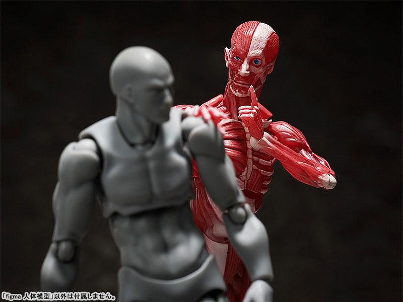 figma『人体模型』可動フィギュア-008