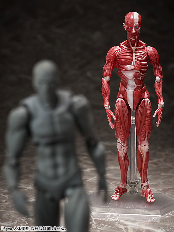 figma『人体模型』可動フィギュア-009