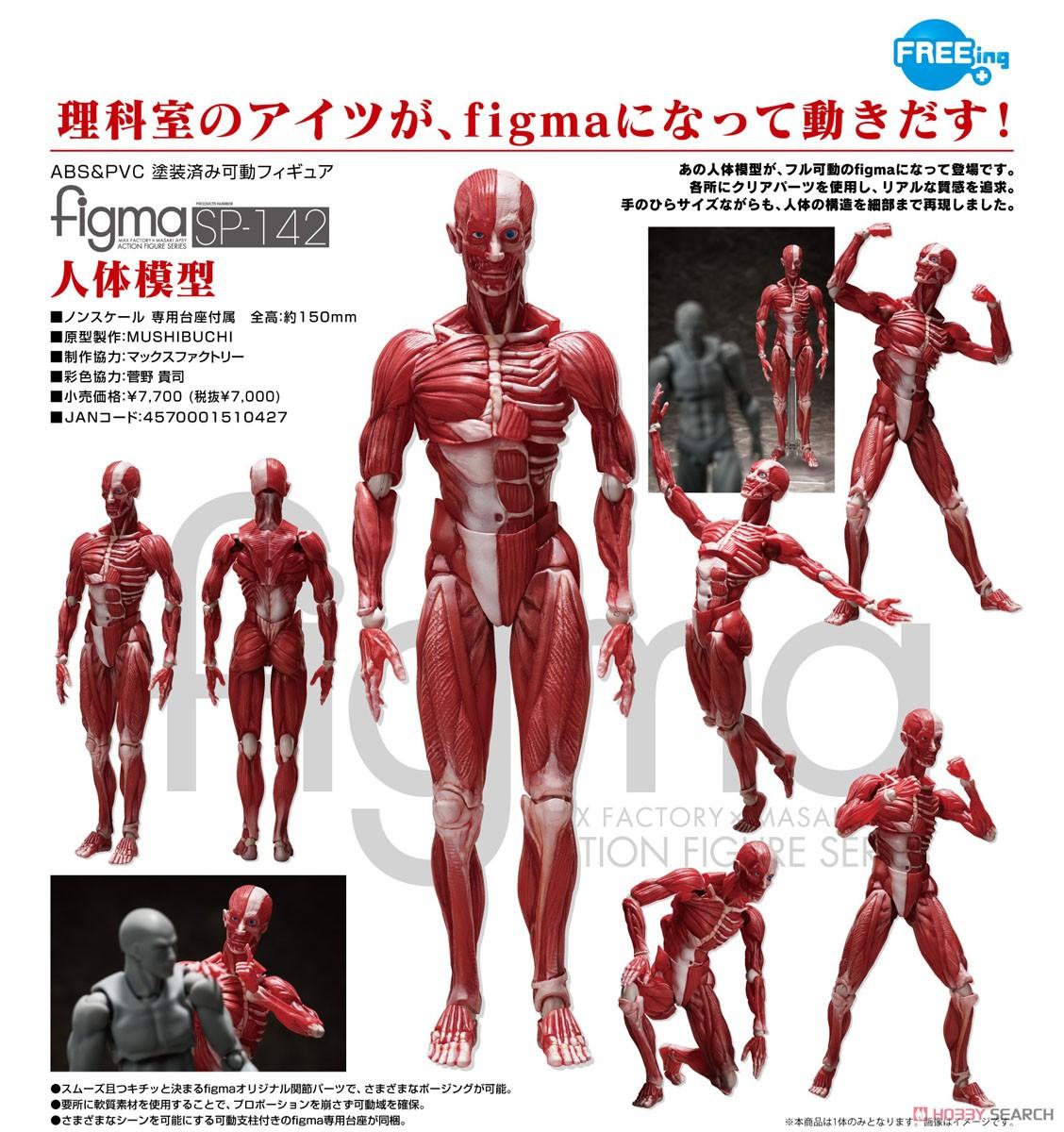 figma『人体模型』可動フィギュア-010
